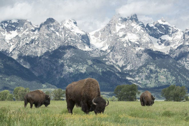 You can find these 10 incredible animals in U.S. national parks