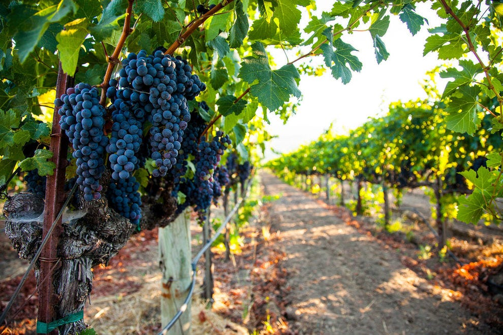 North America has hundreds of wine regions, but these are the best