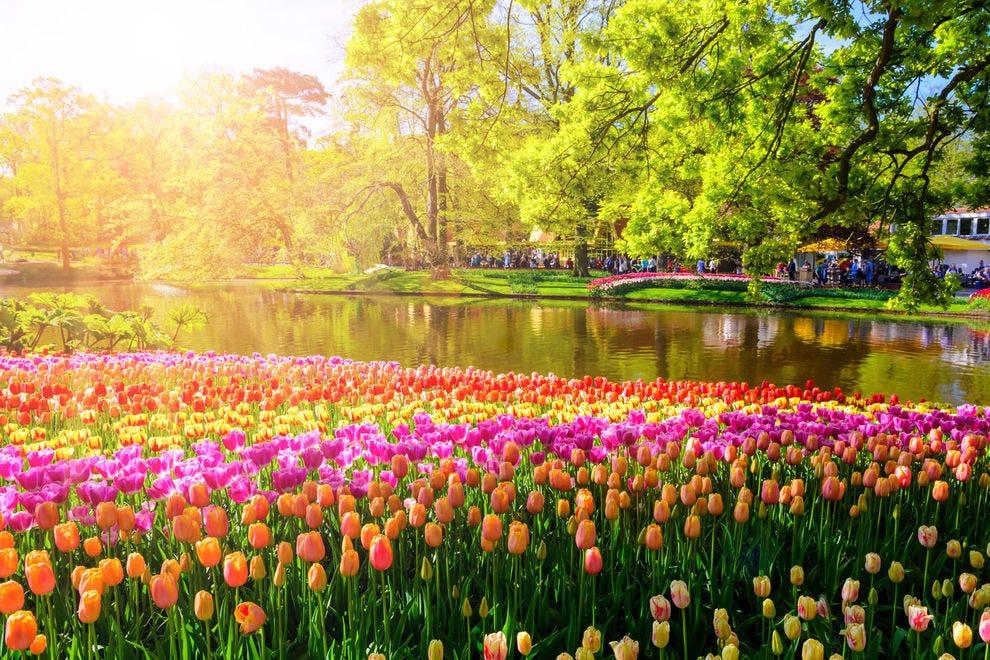 Flowers at Keukenhof park