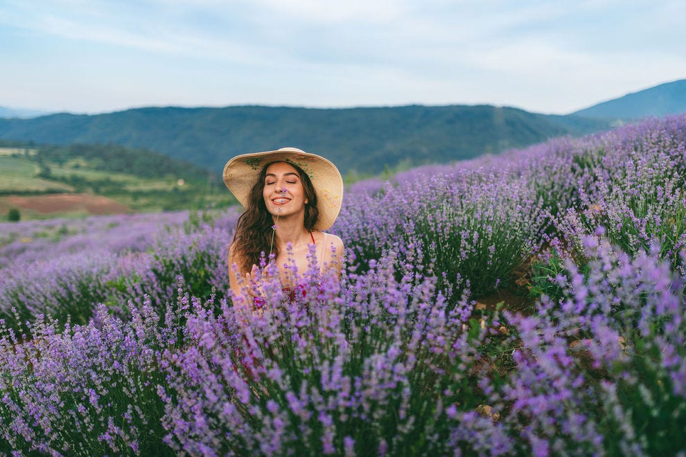 Frolic in a lavender field