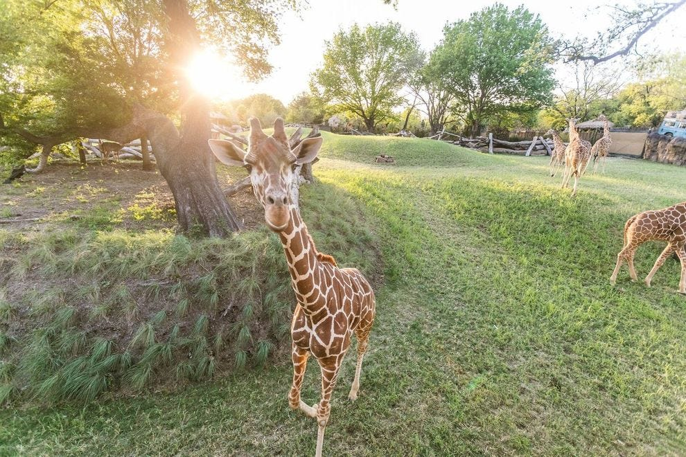 Winning zoo was established in 1909, making it the oldest in Texas