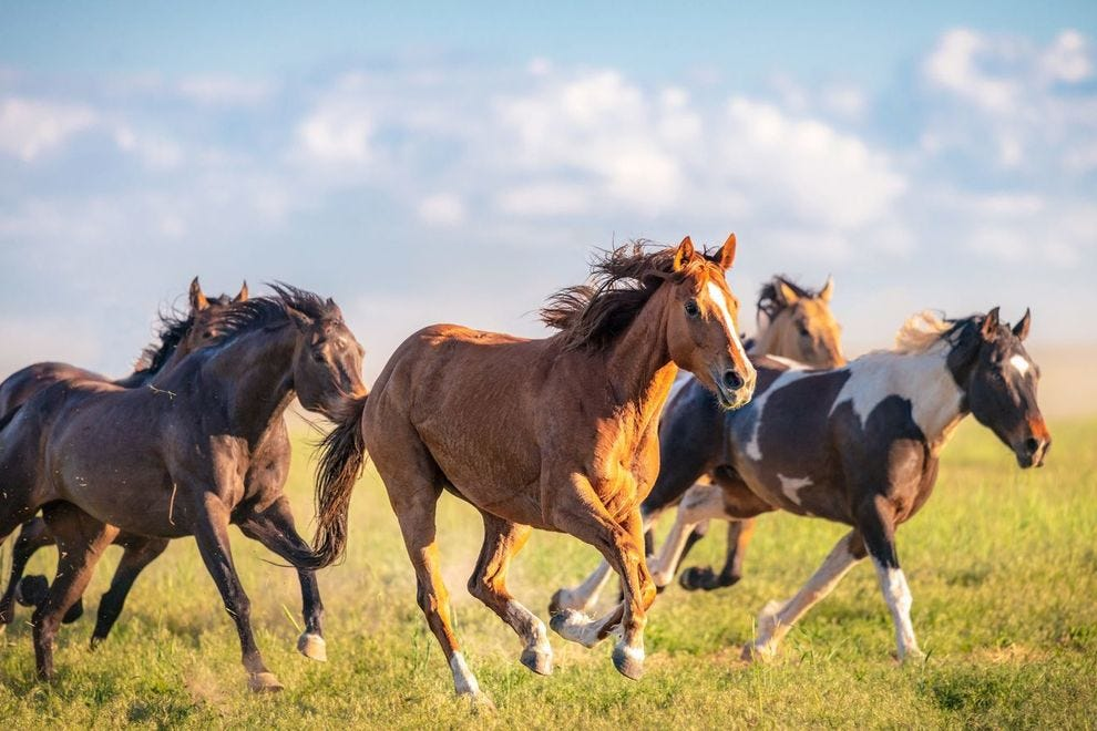 Stays at this winning resort go toward protecting Nevada's wild mustang population