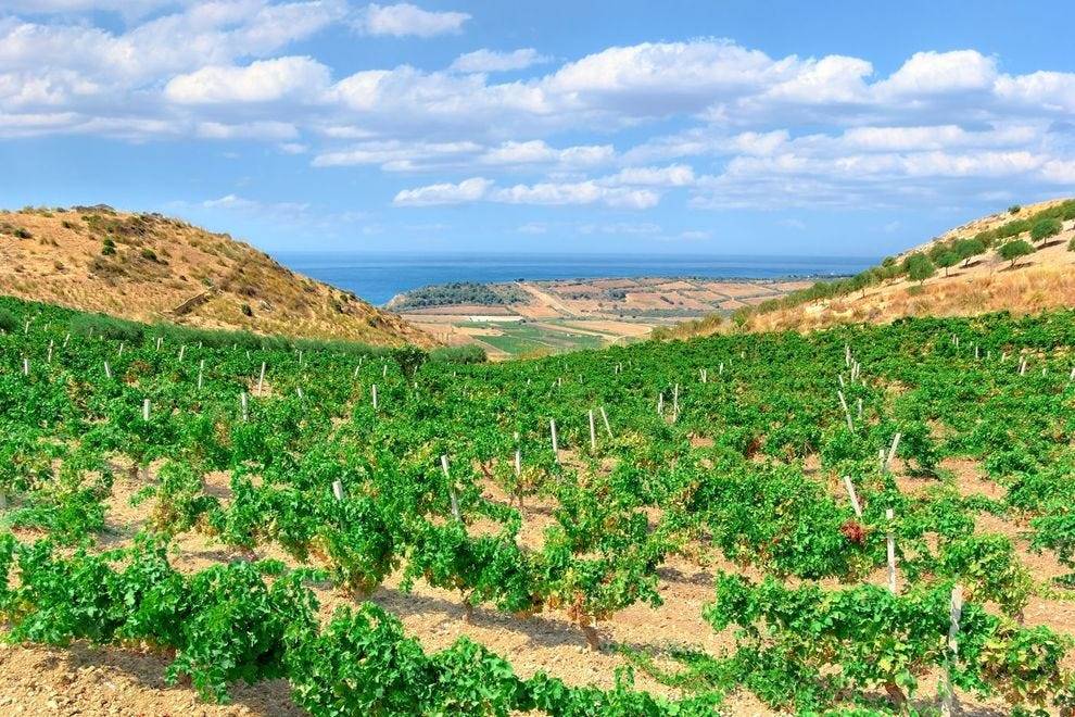 Vineyards by the sea in Sicily