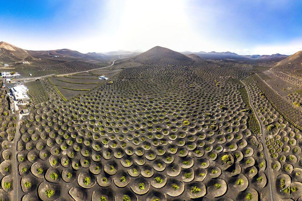 The unique vineyards of Lanzarote