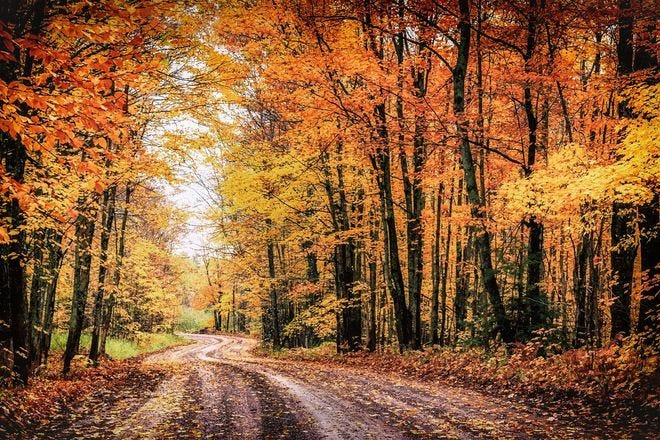 Best things to do this fall where you can social distance