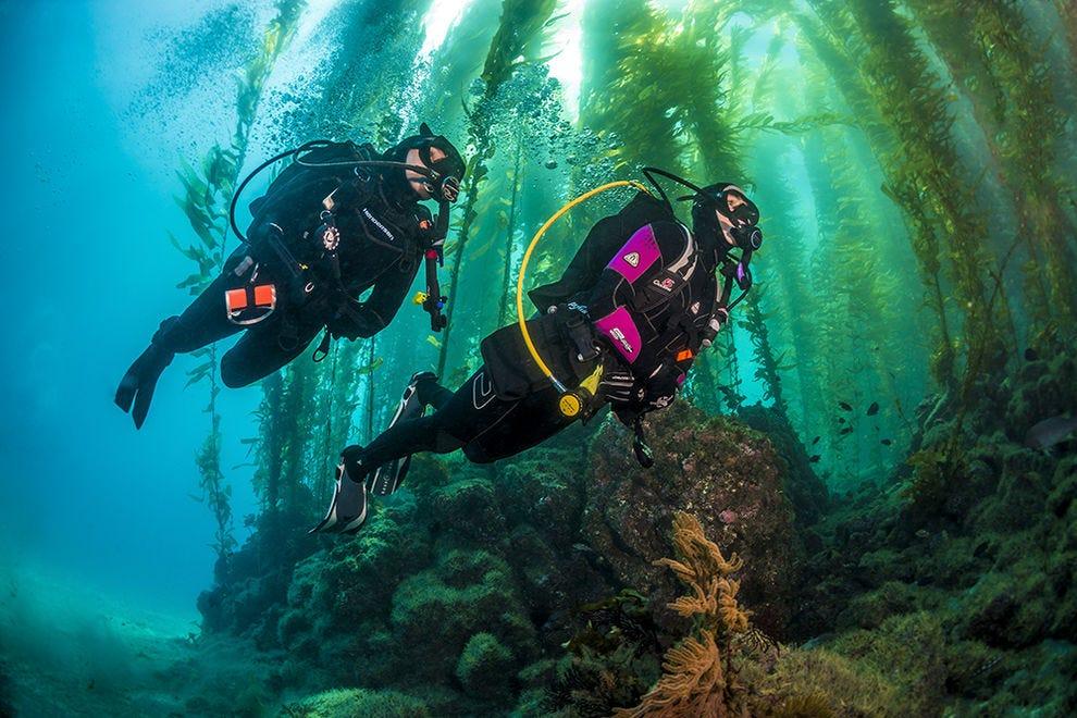 Kelp forest in Channel Islands
