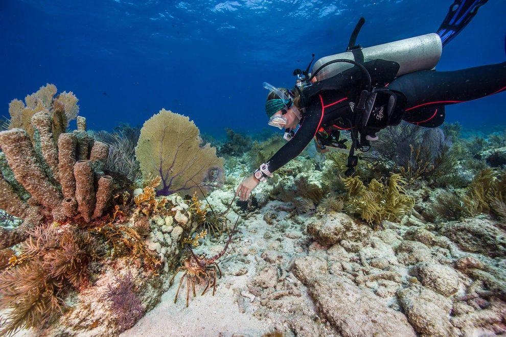 Diver exploring a reef