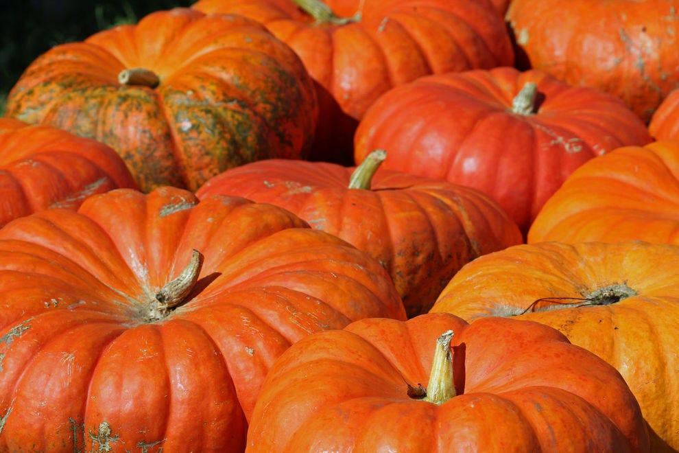 Cinderella pumpkins have a higher water content than other pumpkin varieties