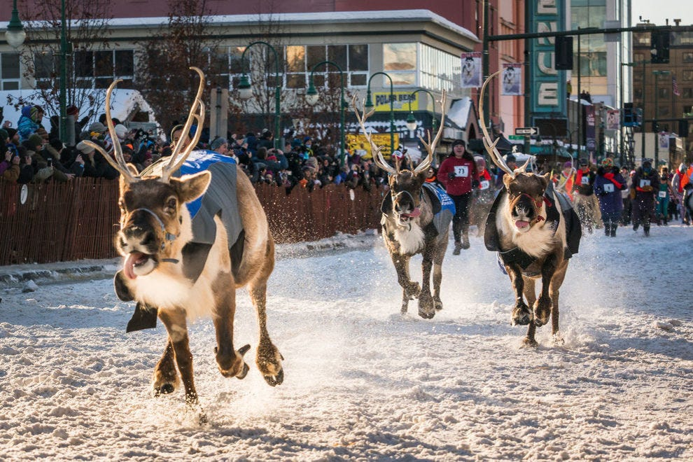 Try to outrun these reindeer