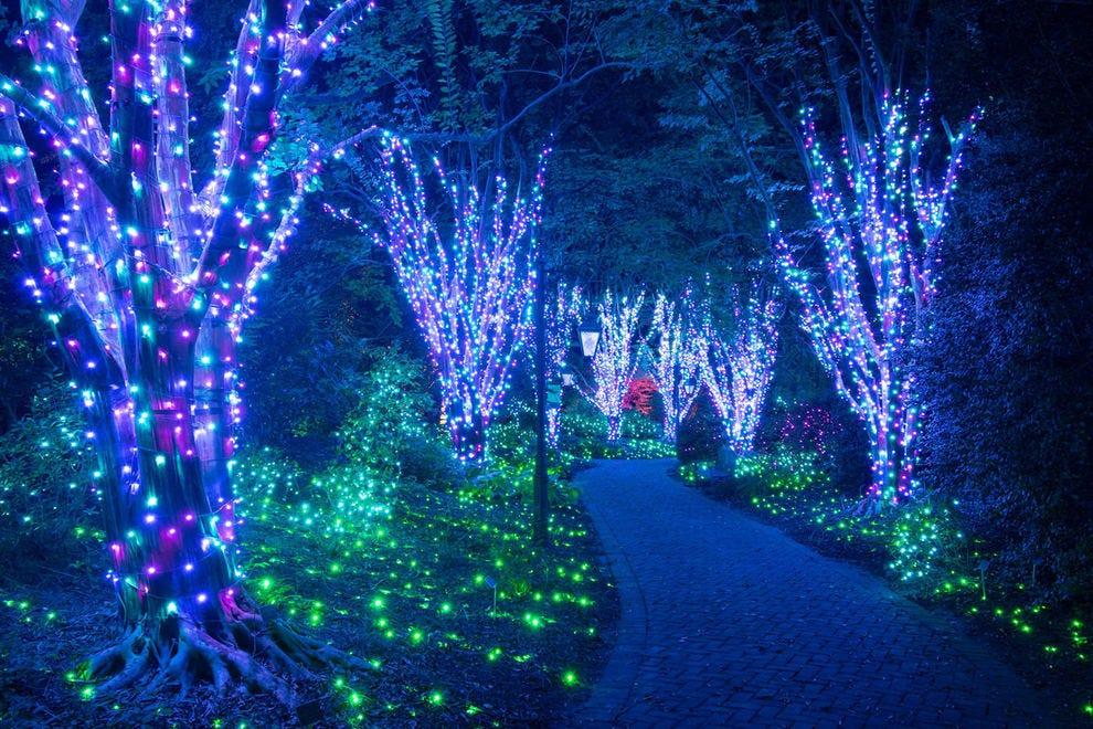San Diego Botanical Garden Christmas Lights 2021 Best Botanical Garden Holiday Lights Winners 2020 Usa Today 10best