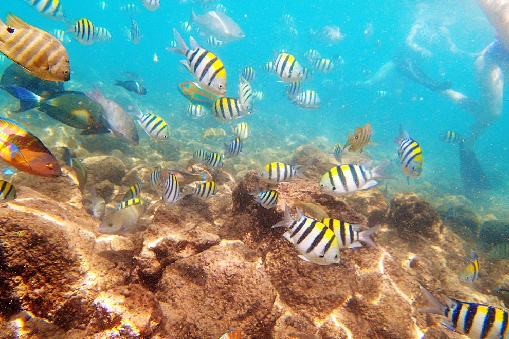 Snorkeling to see reef fish