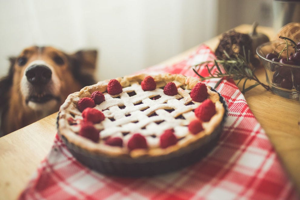 Dog sniffing delicious pie