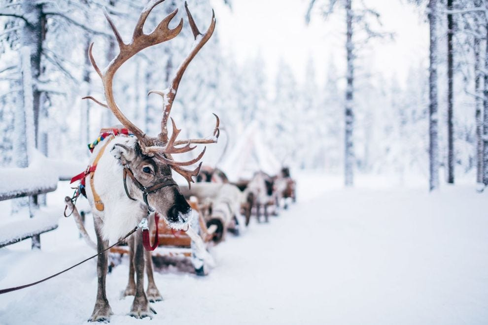 Reindeer sleigh ride at Santa Claus Reindeer