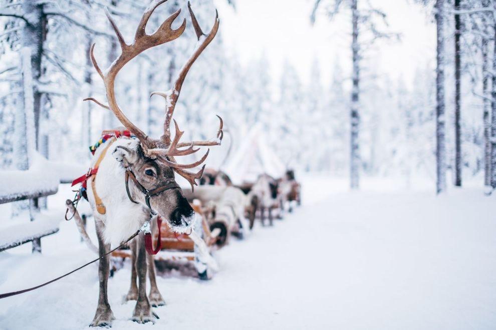 Reindeer sleigh ride at Santa Claus Reindeer