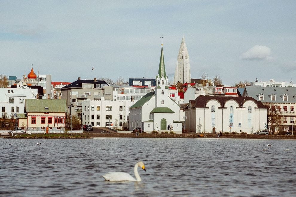 Downtown Reykjavik with swan in foreground