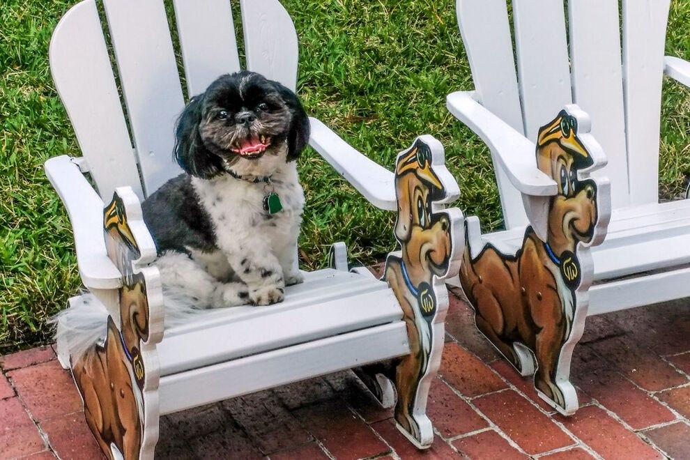 Doggy playground at TradeWinds Island Grand Resort, St. Pete Beach, Florida