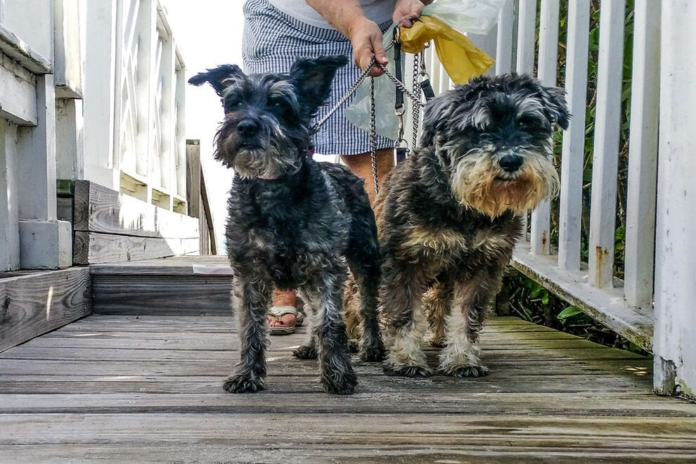 Pups headed to the beach at the Windemere Inn By the Sea