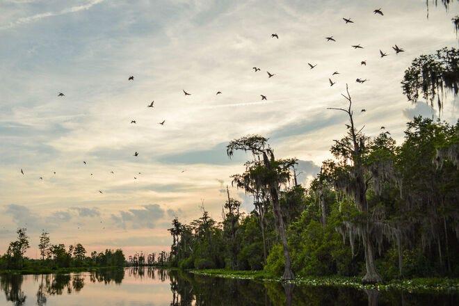 Exploring Okefenokee Swamp, Georgia's top wildlife tourism destination