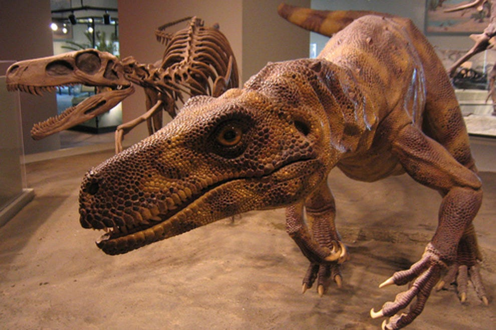Field Museum of Natural History: Chicago Attractions ...
