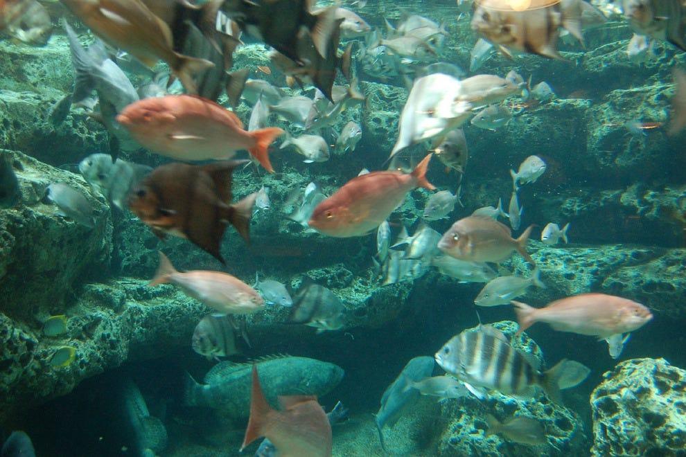 Georgia aquarium atlanta attractions review 10best for Georgia freshwater fish