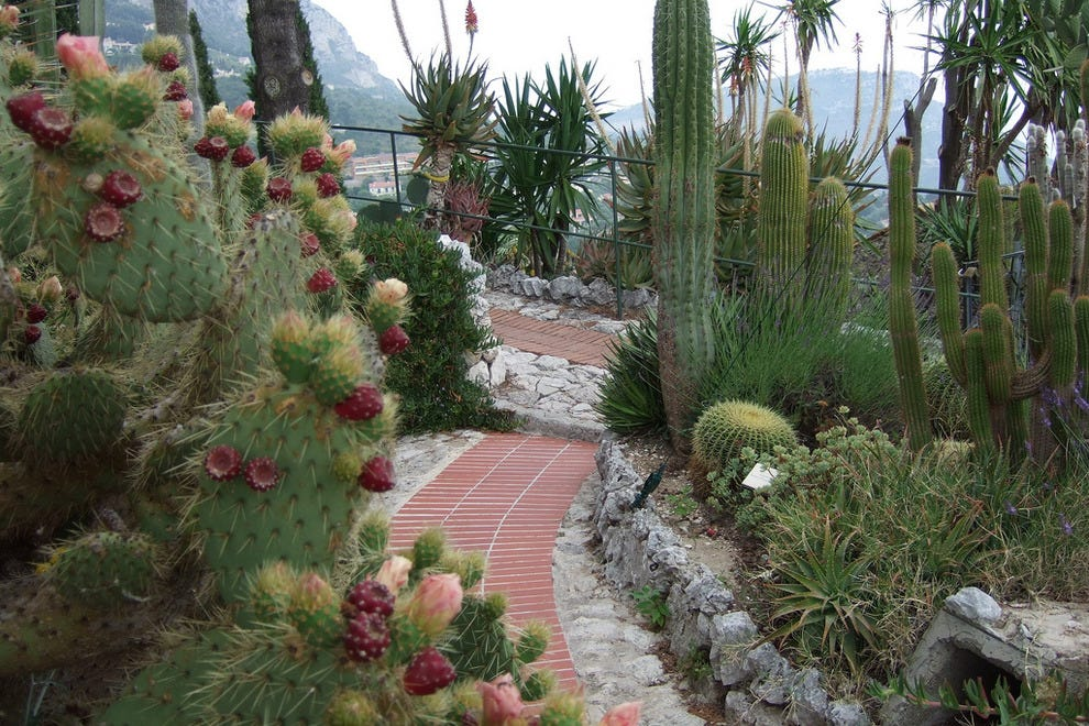 Jardin exotique monte carlo attractions review 10best for Jardin exotique