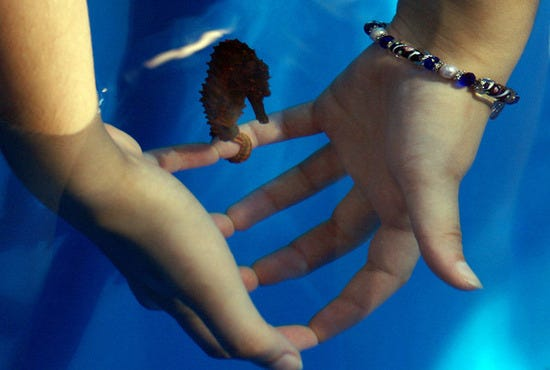 Ocean Rider Seahorse Farm Big Island Attractions Review 10best Experts And Tourist Reviews