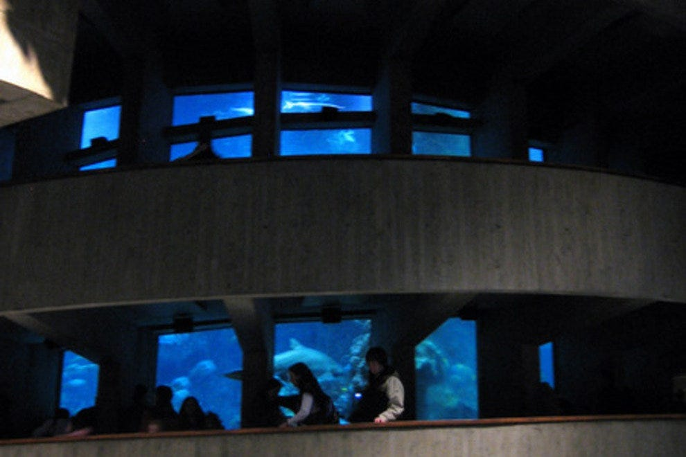 New England Aquarium Boston Attractions Review 10best
