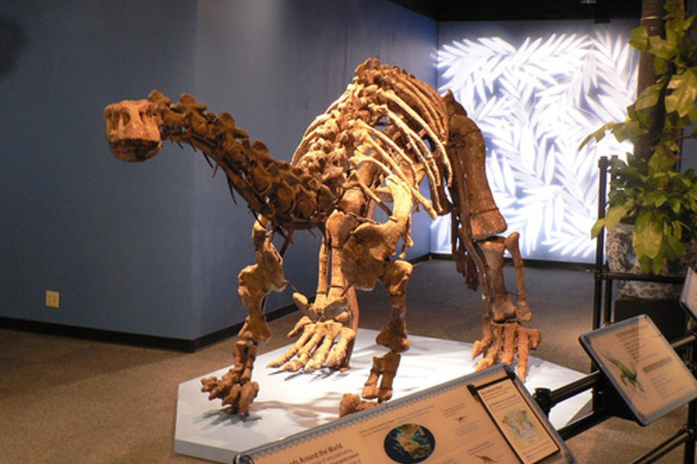 Patricia And Phillip Frost Museum Of Science Miami Attractions Review 10best Experts And