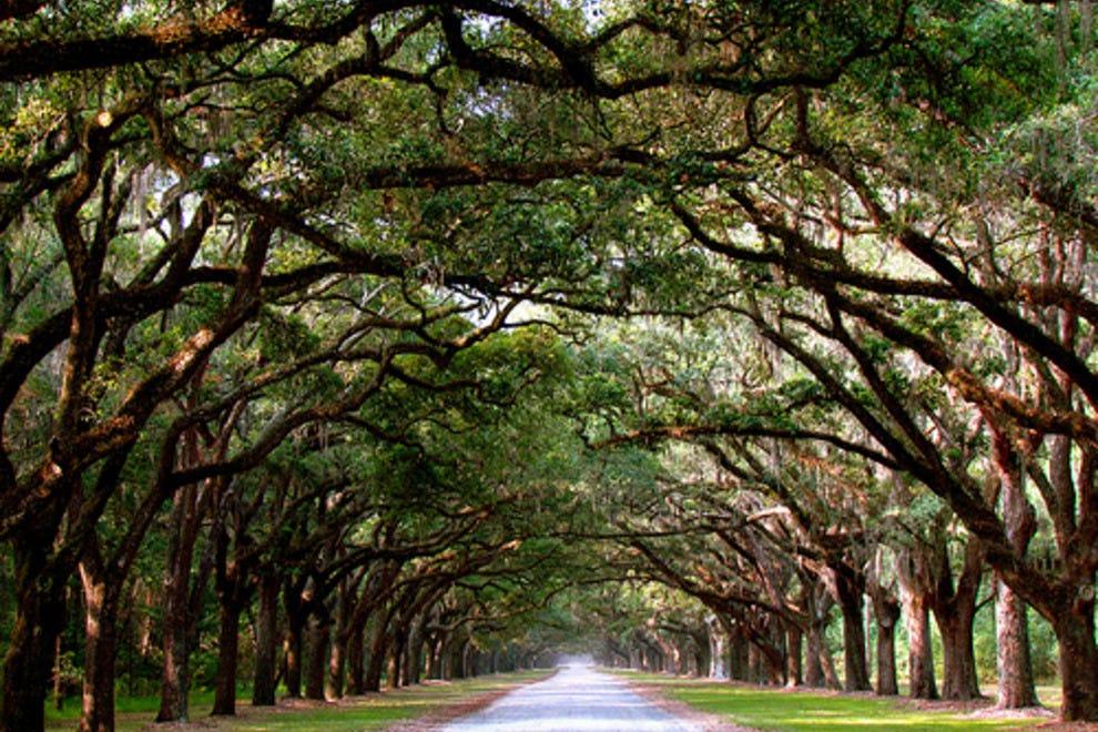 Wormsloe Plantation Historic Site: Savannah Attractions ...