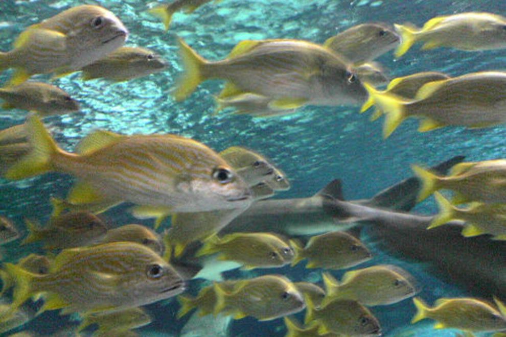 Ripley 39 S Aquarium Myrtle Beach Myrtle Beach Attractions