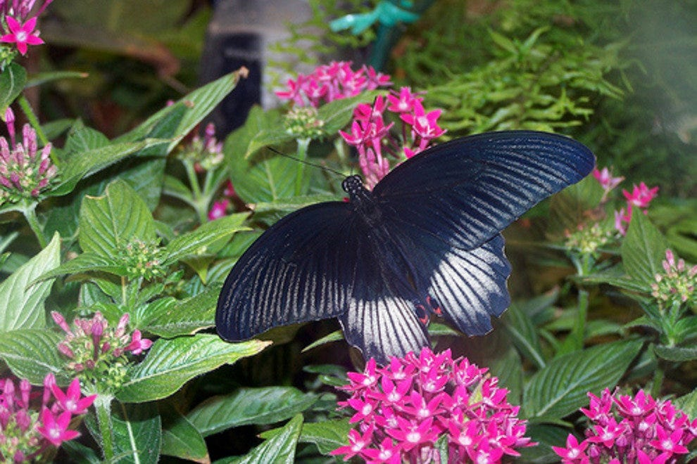 The Butterfly Palace & Rainforest Adventure