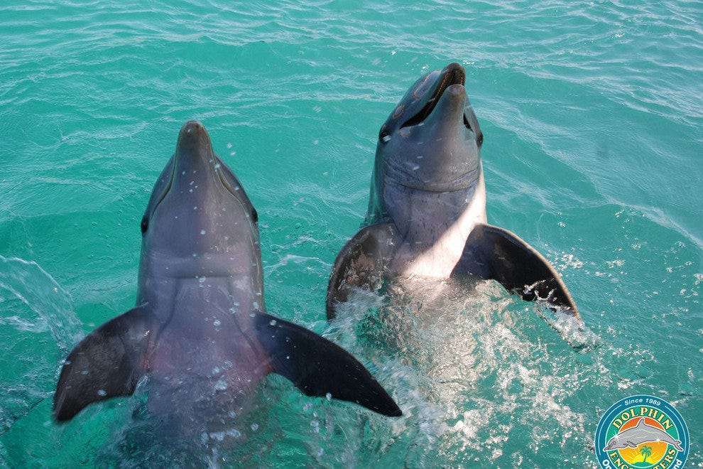 Blue Lagoon Island Dolphin Encounters Nassau Attractions