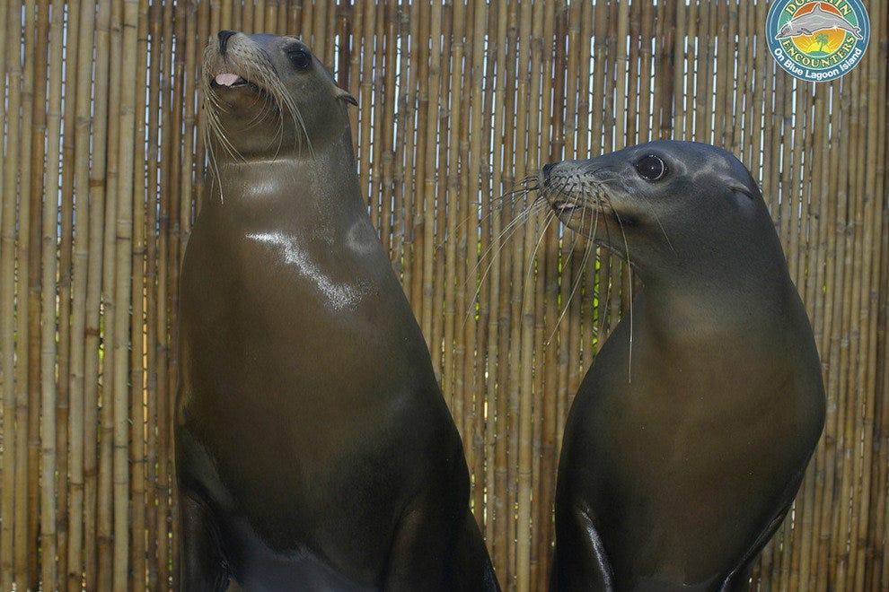蓝泻湖岛海豚相遇