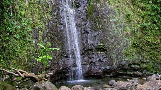 Oahu Photos Manoa Falls Hike